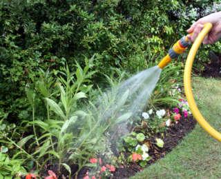 Les tâches essentielles au jardin pour cet été