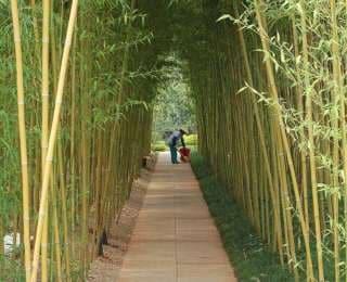 Le bambou, une plante pour votre jardin