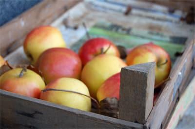 Comment conserver mes fruits apr s la cueillette le - Comment conserver les tomates du jardin ...