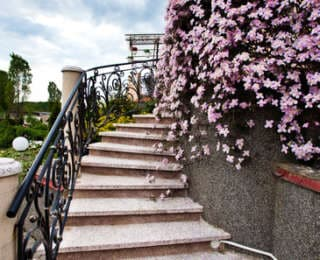 Clématite : comment la planter et l'entretenir