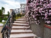 Clématite sur escalier de jardin