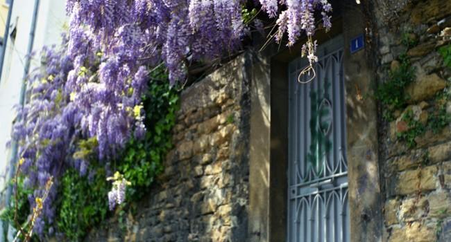Zoom sur le lilas syringa le journal du jardin - Quand tailler les lilas ...