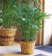 Plantes d 39 int rieur quelle plante d 39 int rieur choisir - Plantes d interieur d ombre ...