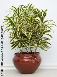 Plantes d 39 int rieur quelle plante d 39 int rieur choisir for Plantes interieurs