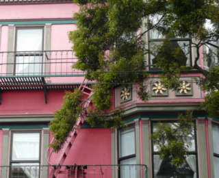 Tour d'horizon vers les jardins de San Francisco