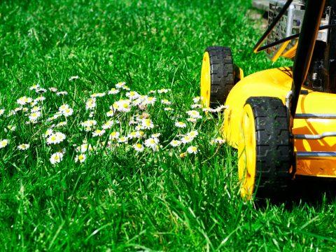 Que faire au jardin au mois d'aout