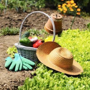 Quelques id es de l gumers planter au potager le journal du jardin - Petit jardin que mettre mulhouse ...
