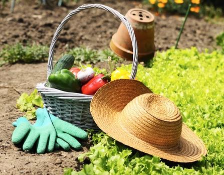 Quelques id es de l gumes planter au potager le journal du jardin - Quel legume planter en aout ...