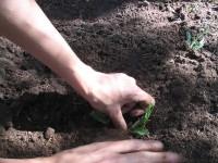 Planter, potager