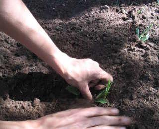 Préparer sol et terre avant de semer