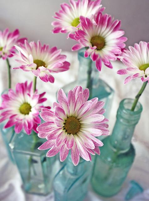 fleurs-a-tiges-bouteille