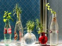 fleurs-en-bouteilles