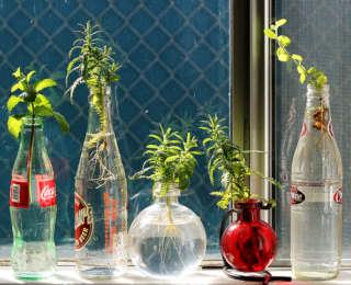 La bouteille, un vase parfois original !