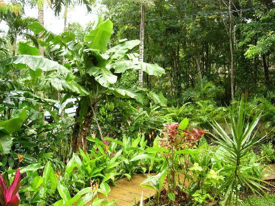 Crer un jardin exotique beautiful comment amnager son jardin pour russir un extrieur ultra for Conseil pour le jardin