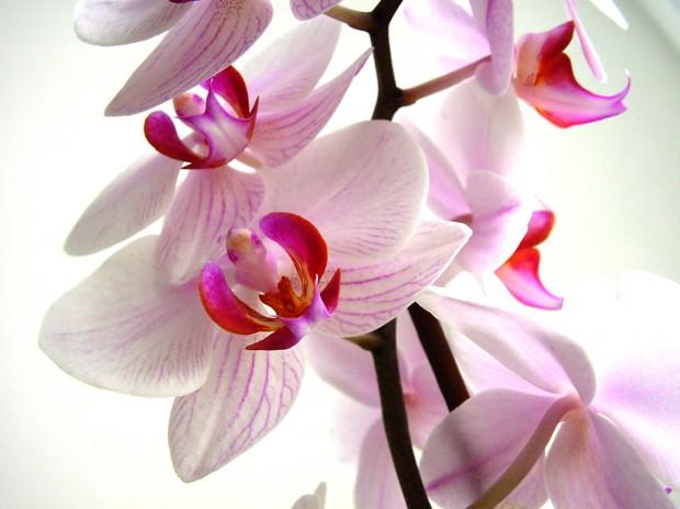 502 bad gateway - Arrosage orchidee d interieur ...
