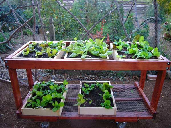 Table de potager construire une table pour votre potager - Construire une table de jardin ...