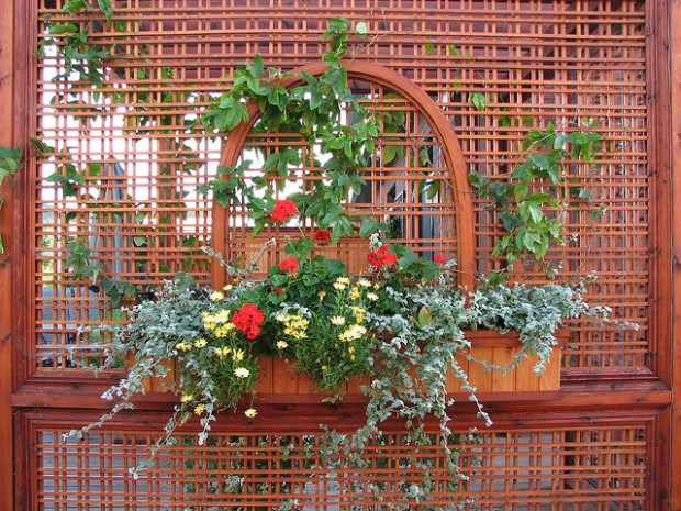 Quelles plantes mettre sur un treillis le journal du jardin for Jardiniere pour plante grimpante