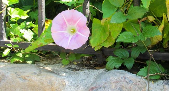 Reconna tre les mauvaises herbes au jardin le journal du for Mauvaises herbes du jardin photos