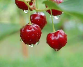 Faire pousser des fruits