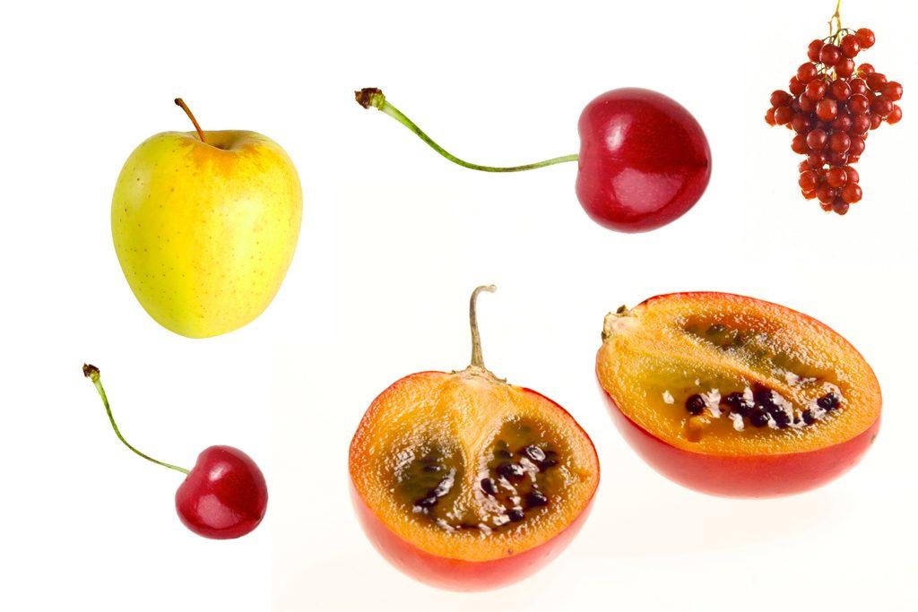 Quel arbre fruitier planter le journal du jardin - Quel arbre fruitier planter ...