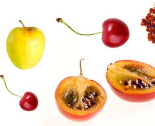 Les principaux fruitiers