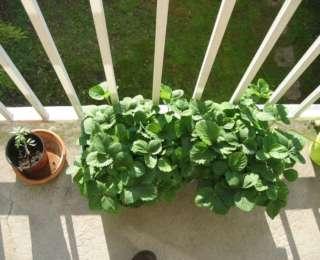 Les contenants pour jardiner au balcon