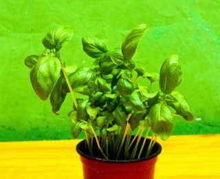 Quel terreau pour mes plantes aromatiques ?