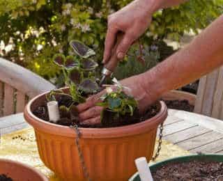 Réussir le rempotage de mes plantes