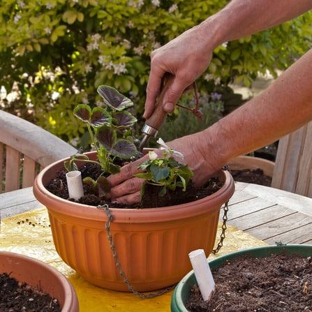 rempoter une plante aide rempotage plante le journal du jardin. Black Bedroom Furniture Sets. Home Design Ideas