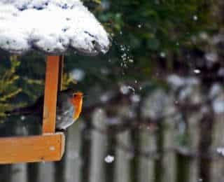 Nourrir les oiseaux de la nature toute l'annee.