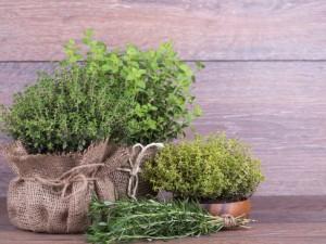 herbes fraîches et thym