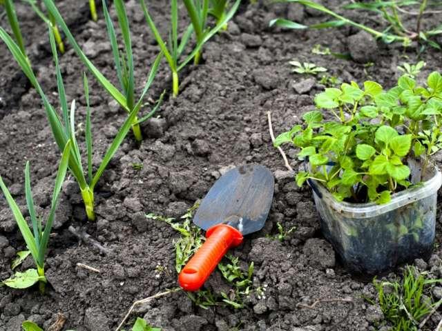 Que faire au mois de Mai au jardin ?
