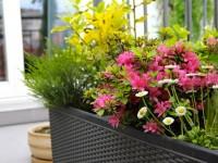 Balcon avec jardiniere