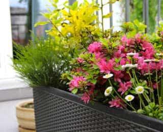 Entretenir mes fleurs de balcon et d'été