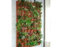 mur-vegetal-d-interieur
