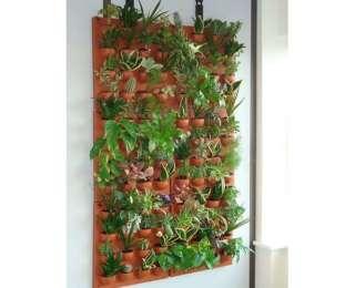 Les plantes d'intérieur : une décoration naturelle