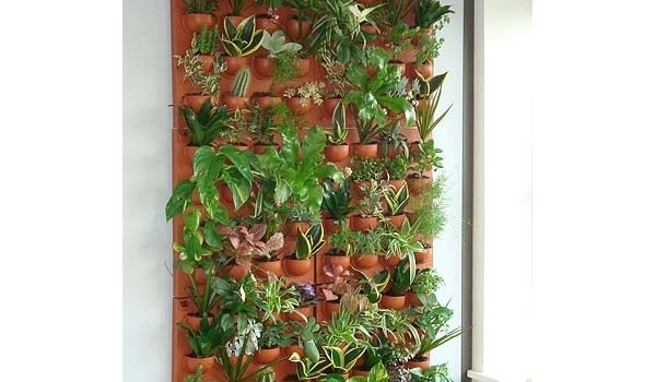 Les plantes d int rieur une d coration naturelle le for Decoration de mur interieur