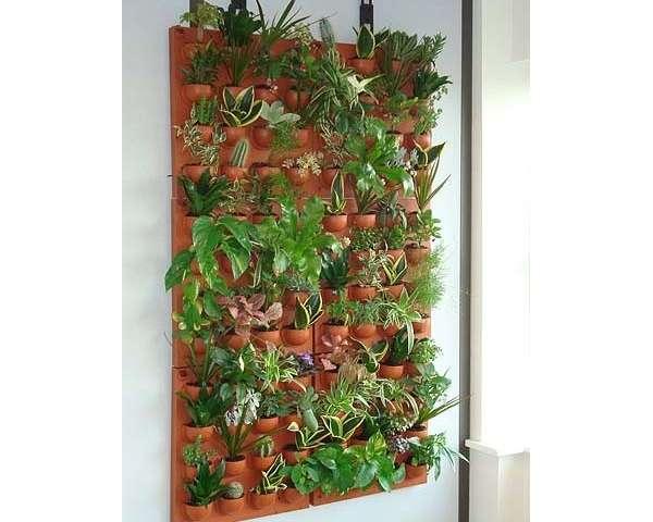 les plantes dintrieur une dcoration naturelle