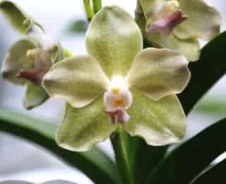8 trucs & astuces pour vos orchidées