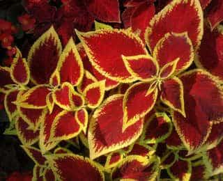 8 plantes d'intérieur en pot à découvrir