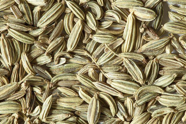 graines-de-fenouil