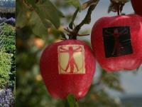 jardins-fruitiers-Laquenexy