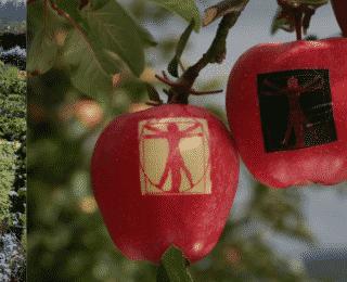 Mars : réouverture des Jardins Fruitiers de Laquenexy