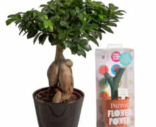 Nouveauté : des plantes connectées dans votre intérieur