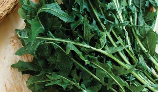 10 plantes qui font maigrir conna tre le journal du jardin for Maigrir avec des plantes