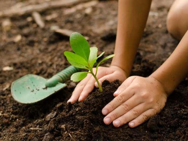 8 conseils sur la plantation des plantes d'extérieur au jardin