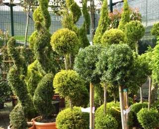 Comment garder ses plantes et arbustes en bonne santé ?
