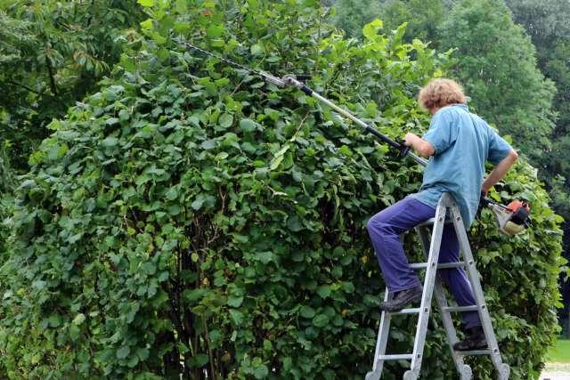 jardinier qui élague une haie
