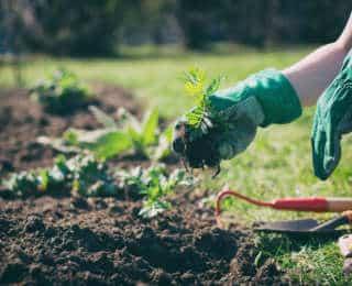 Gants de jardinage : comment les choisir ?