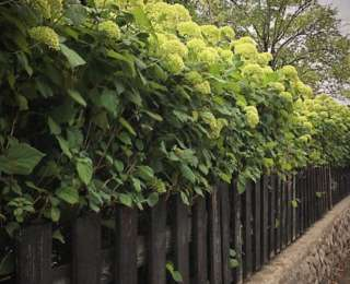 Les clôtures au jardin : naturelle ou artificielle ?